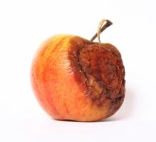 Warum Apple und Co. alles sind – nur nicht innovativ